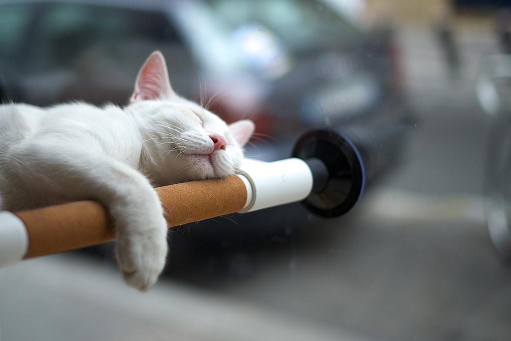 frederic chat Retrouvez la biographie, l'interview, les coordonnées, les mandats ainsi que toutes les informations concernant frederic chat sur bfmbusinesscom.