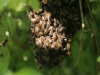 Nid d\'abeilles