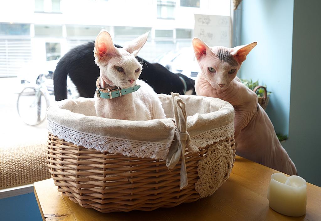 chat mallows caf l 39 oeil de fred fr d ric fleury. Black Bedroom Furniture Sets. Home Design Ideas