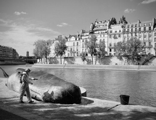 Cachalot échoué à Paris