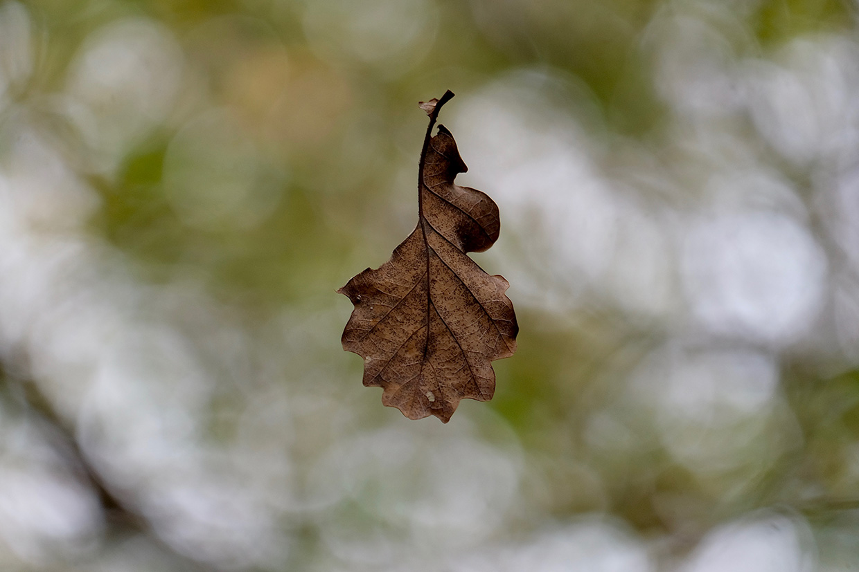 La feuille d'automne - 2016